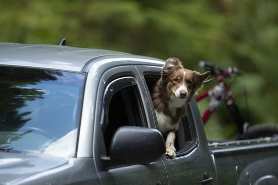 SLorencePhoto dogs Emmy 102