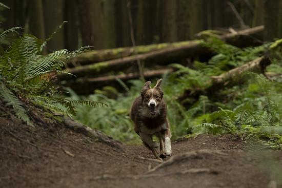 SLorencePhoto dogs Emmy 157
