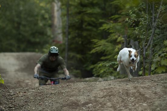 SLorencePhoto dogs Levi 005