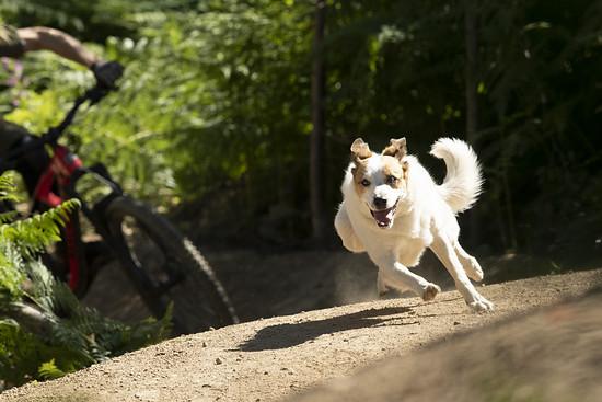 SLorencePhoto dogs Levi 013