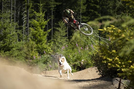 SLorencePhoto dogs Levi 022
