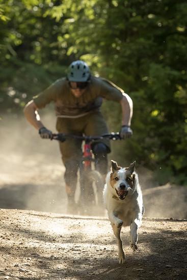 SLorencePhoto dogs Levi 028