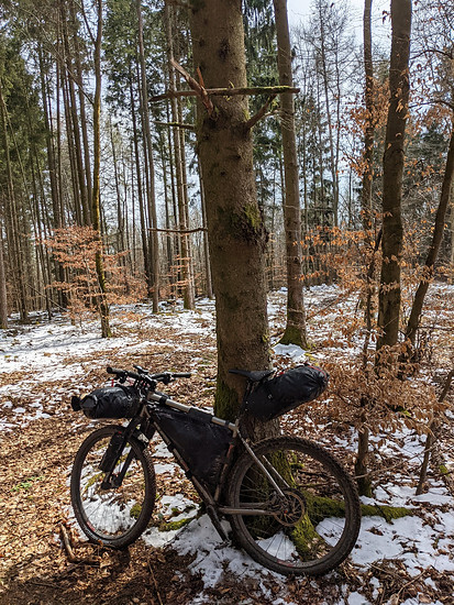 Coronive6 Kalt im Wald
