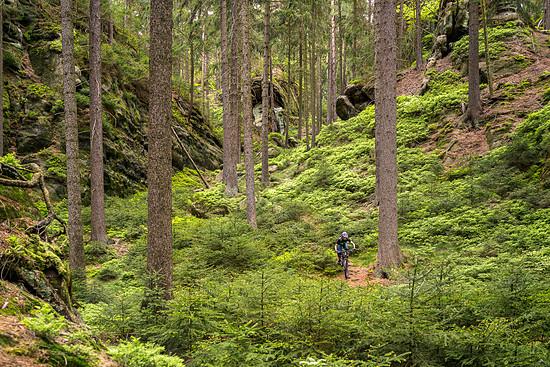 Das grüne Zittauer Gebirge