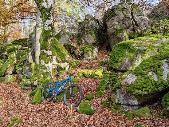 Schwarzwald Trail