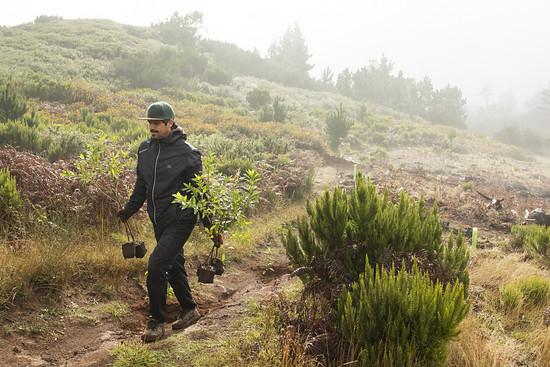Für jede Einzelspende wird außerdem ein neuer Baum gepflanzt.