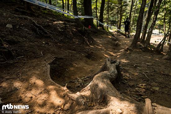 Der Abschnitt der anderen Strecke, von der niemand so wirklich weiß, ob es nun Strecke 1 oder Strecke 2 ist, verläuft derweil durch eine kurze Waldsektion