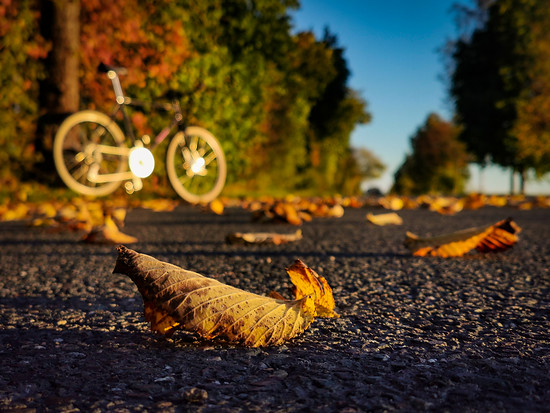 autumn vibes, oder Sonntag früh beim Semmel'n holen 😉